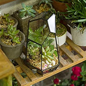 7.4 inches Glass Geometric Succulent Terrarium Balcony Polyhedron Irregular Plant Planter Box Fern Moss Display Flower Pot Indoor Outdoor Decoration Wardian Case Centerpiece for Wedding Coffee Table 4