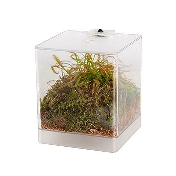 Swampworld Mini Terrarium Led Light Carnivorous Plant Sundew