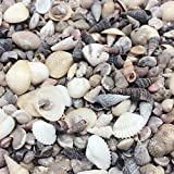 PEPPERLONELY India Natural Sea Shells Mixed, Small, 1/4 Inch to 1 Inch in Sizes, 8 oz, Apprx. 1500PC Shells