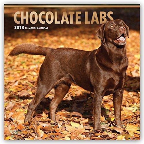 Labrador Retrievers, Chocolate 2018 Monthly Square Wall Calendar FOIL