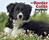 Just Border Collie Puppies 2014 Wall Calendar