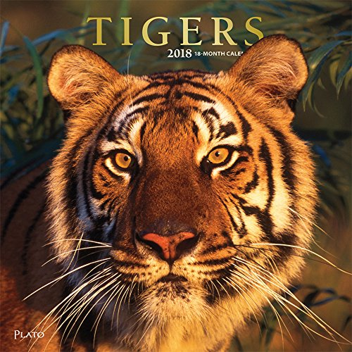 Tigers 2018 Monthly Square Wall Calendar