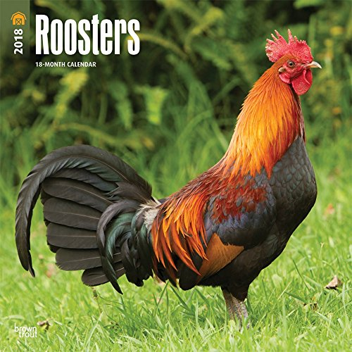 Roosters Wall Calendar 2018 CHEAPEST {jg} Best Holiday Gift Ideas - Great for mom, dad, sister, brother, grandparents, grandchildren, grandma, gay, lgbtq. by HBT