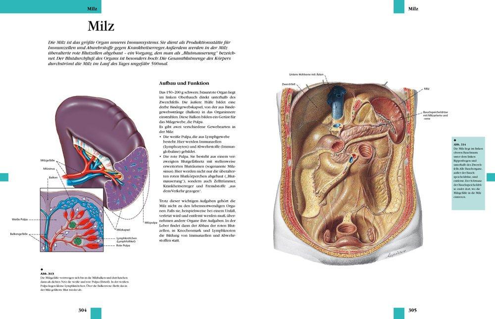 Atlas der Anatomie: Organe, Systeme und Strukturen. Mit lateinischer ...