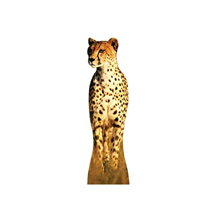 2cbfa5bb10c8 Amazon.com: Advanced Graphics Cheetah Life Size Cardboard Cutout ...