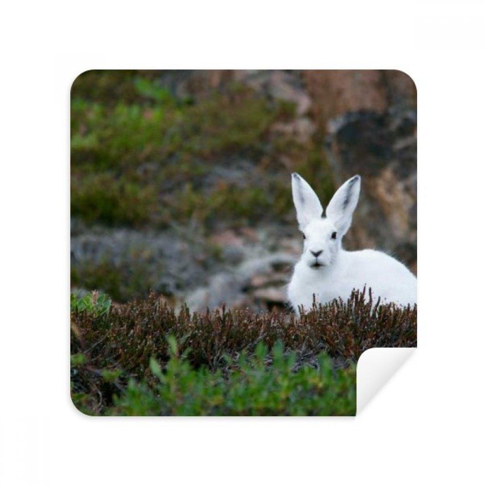 ウサギホワイトScience Nature Sceneryメガネクリーニングクロス電話画面クリーナースエードファブリック2pcs   B07C91BPDJ