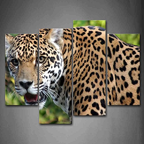 Jaguar Wall Art