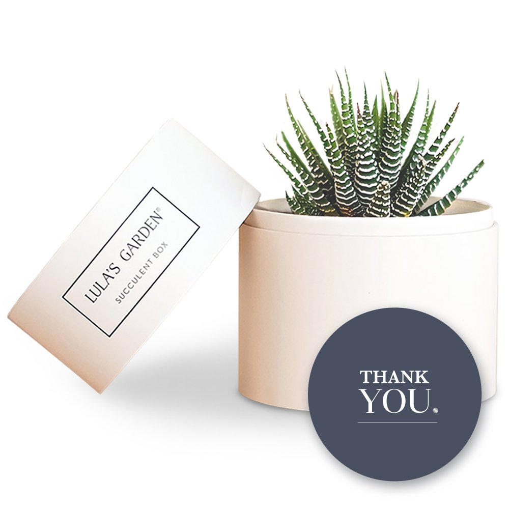 Live Succulent Zebra Garden Centerpiece and Thank You Gift Box - Perfect and Unique Gift for Wife, Mom, Friend, Co-workers, Boss or Teacher (Petite Zebra Garden, Thank You)