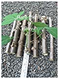 2 Tapioca, Manihot Esculenta Or Cassava (5 inch) Stem Cuttings for Growing