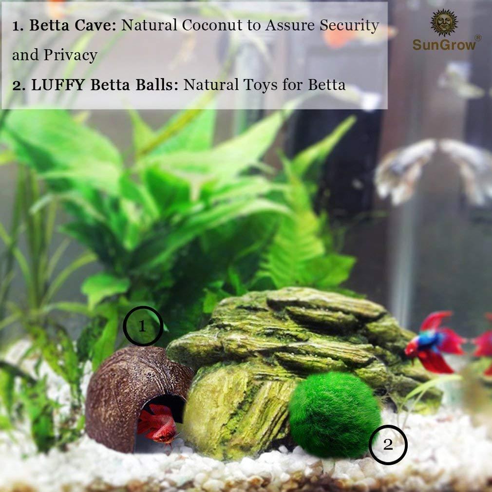 SunGrow Luffy - Pelotas de Betta: Planta de Marimo, Forma Redonda, Juguetes Naturales para Peces Betta: Seguro para el Acuario: Amazon.es: Productos para ...