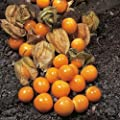 Aunt Molly's Ground Cherry,gooseberry,Poha Berry,1 oz SEED (Physalis Peruviana)