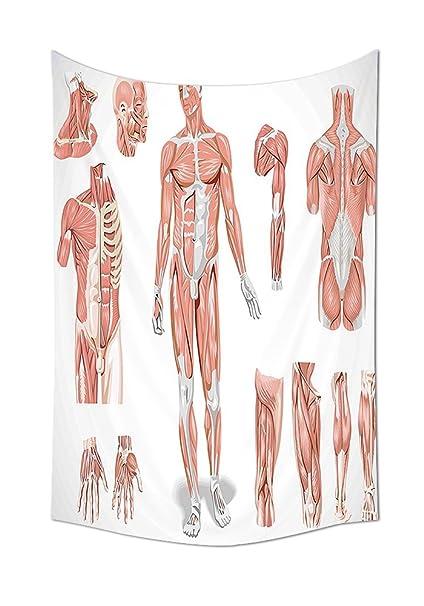 Anatomía Humana Diseño Interior Sistema Muscular piel estructura con ...