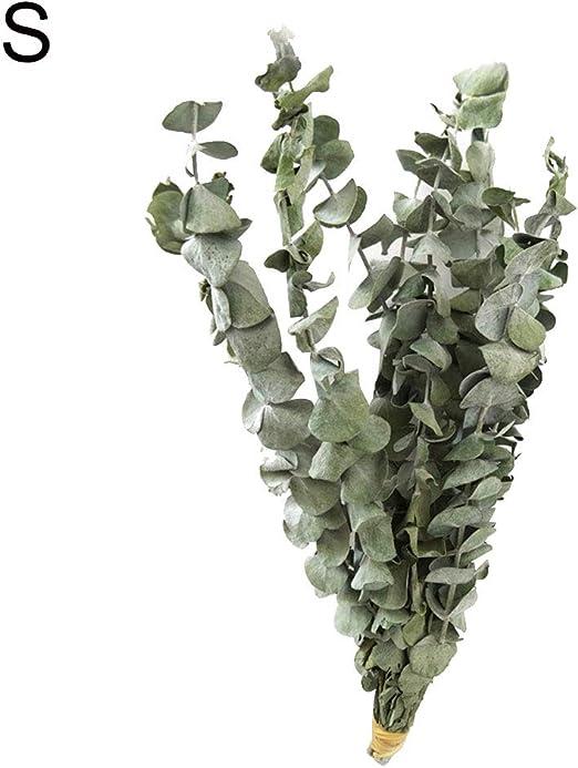 pittospwer 10Pcs Bouquet Secchi Rami di eucalipto Naturale Foglie Decorazione Floreale S