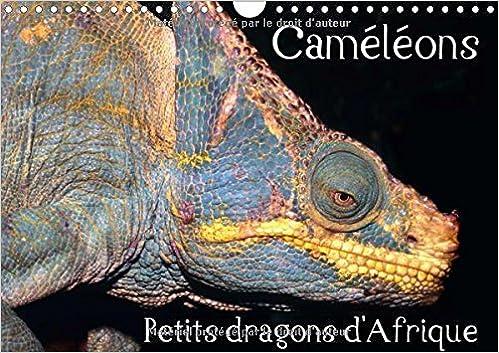 Livres gratuits en ligne Cameleons - Petits Dragons d'Afrique 2016: Douze Portraits Extraordinaires des Plus Surprenantes Especes de Cameleons pdf epub