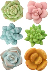 Segreto Creative Refrigerator Magnet Simulated Succulent Plant Resin Fridge Magnet for House Office Kitchen Whiteboard,6 pcs