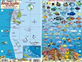 Bimini Islands Bahamas Dive Map & Reef Creatures Guide Franko Maps Laminated Fish Card
