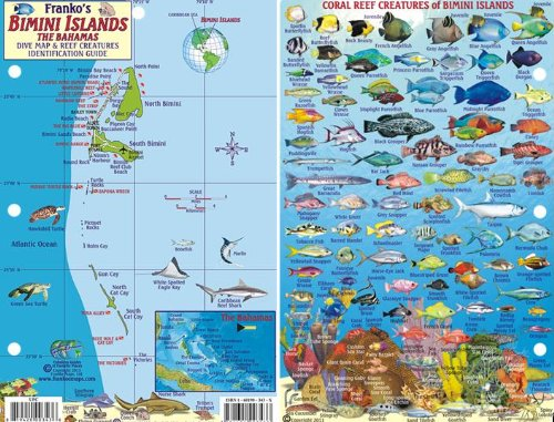 bimini dive buyer's guide for 2020