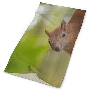 Headwear Squirrel Sweatband Elastic Turban Sport Headband Outdoor Head Wrap