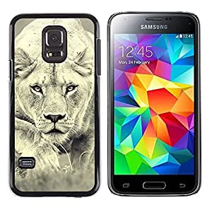 Stuss Case / Funda Carcasa protectora - Lion Photo Female Hunting Safary Big Cat - Samsung Galaxy S5 Mini, SM-G800, NOT S5 REGULAR!