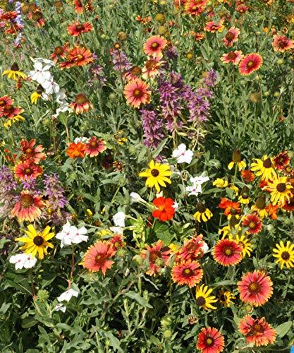 Florida & Gulf Coast Wildflower Mix Seeds Deep South Flower Blend ST22 (6400 Seeds)
