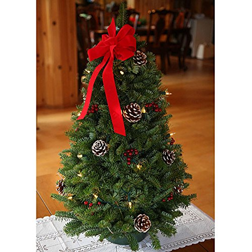 Fresh-cut Classic Pre-lit 28-inch Maine Balsam Tabletop Tree Un-lit Trees