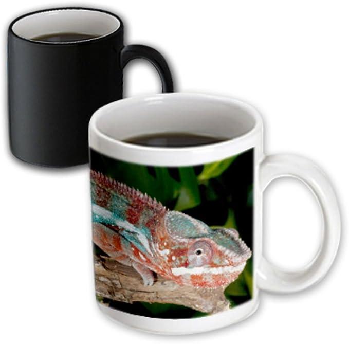 3drose 83816 1 Peregrine Falcon Bird Native To Us Na02 Dno0141 David Northcott Ceramic Mug 11 Oz White