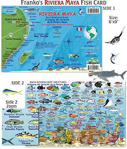 Amazoncom Franko Maps Riviera Maya Reef Creatures Fish ID for