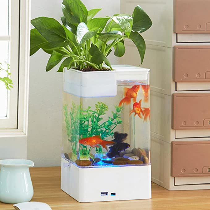 bayrick - Kit de Acuario Creativo para Escritorio, Limpieza automática, Mini pecera + luz LED Colorida: Amazon.es: Productos para mascotas
