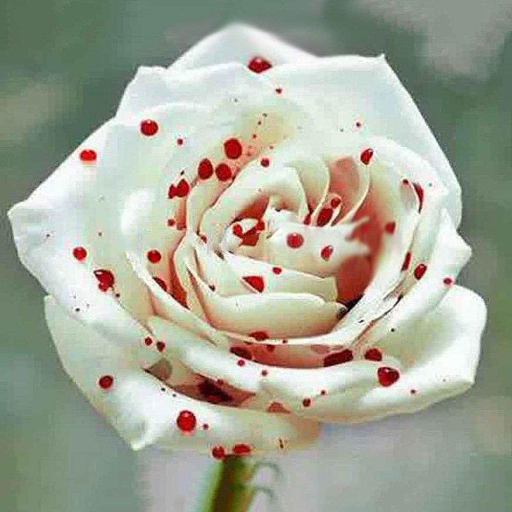 WuWxiuzhzhuo 200Pcs Rare Blanc Drop Sang Graines de Fleur Rose, Home Décor de Jardin de Plantes de Graines
