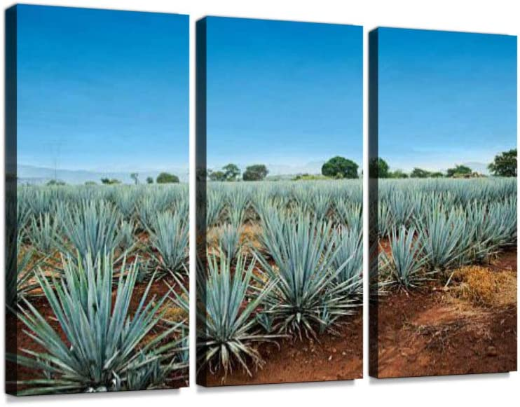Tequila Landscape 3 Pieces Print On Canvas Wall Artwork Modern Photography Home Decor Unique Pattern Stretched and Framed 3 Piece