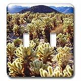 3dRose lsp_209293_2 Usa, California, Joshua Tree National Park. Teddy Bear Cholla Cactus. - Double Toggle Switch
