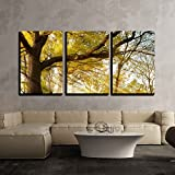 old oak - wall26 - 3 Piece Canvas Wall Art - a Huge Old Oak Tree in Autumn Park Lighted Sun Sunrise - Modern Home Decor Stretched and Framed Ready to Hang - 24
