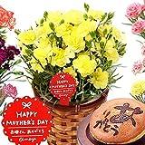 母の日 の プレゼント カーネーション鉢花とスイーツセット 花とスイーツ (14.黄色)