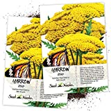 Seed Needs, Gold Yarrow (Achillea filipendulina) Twin Pack of 500 Seeds Each