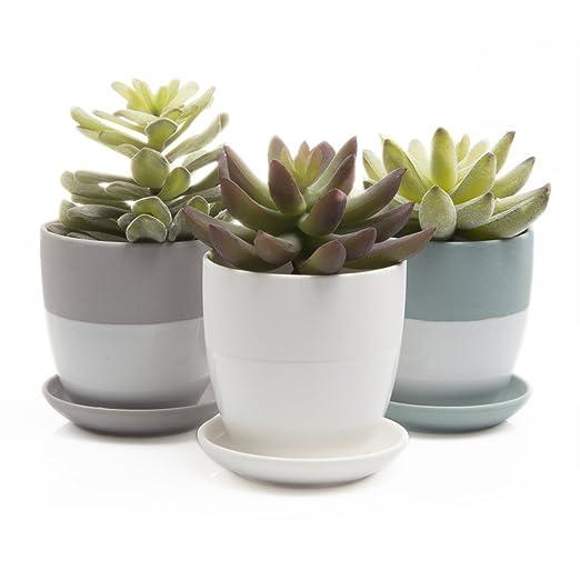 Chive - Dyad, pequeñas, redondas y Cactus suculentas maceta, maceta de arcilla con orificio de drenaje y plato, acabado mate, Bulk 3 unidades bandeja y dish ...