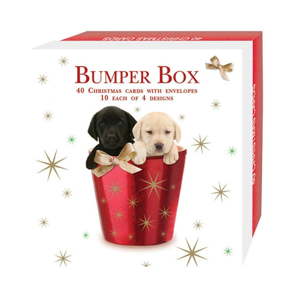 Mixed Dog Christmas Card Bumper Box Amazon Kitchen Home