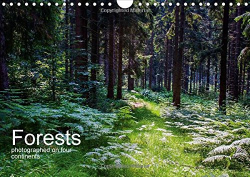 Forests photographed on four continents 2015: See pictures of forests in Germany, Namibia, South Africa, Australia and USA. (Calvendo Places) PDF