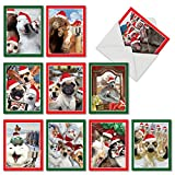 M2373XSG Holiday Animal Selfie: 10 Assorted Christmas Note Cards Featuring Sweet and Funny Animals Capturing Christmas Selfies of Themselves and Their Animal Friends, w/White Envelopes.