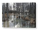 Woodland Stillness / Nature Scene / Ready to Hang Wall Art/ Fine Art Photography ~ CANVAS WRAP PRINT