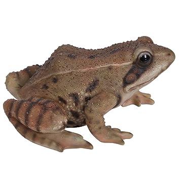 vivid arts real life frog amazon co uk garden outdoors