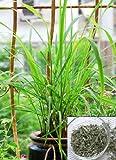 9GreenBox - Lemon Grass - 2 Pack