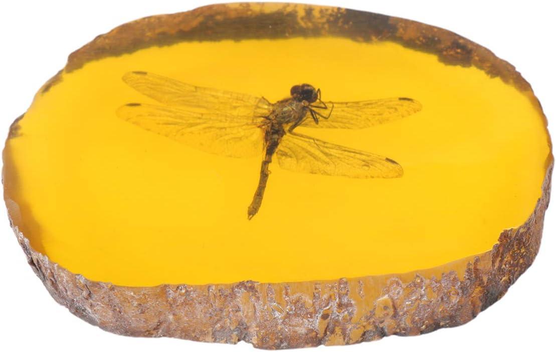 Vosarea ámbar colgante piedra ámbar muestra de insecto colección de artesanías de resina para la fabricación de joyas collar pulseras decoraciones para el hogar (libélula)