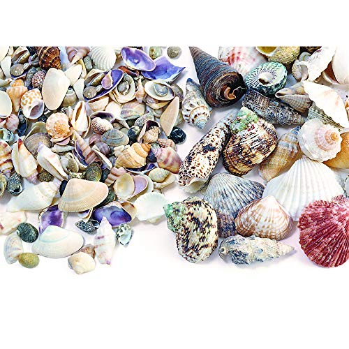 Colorations Shells Small Medium Size product image