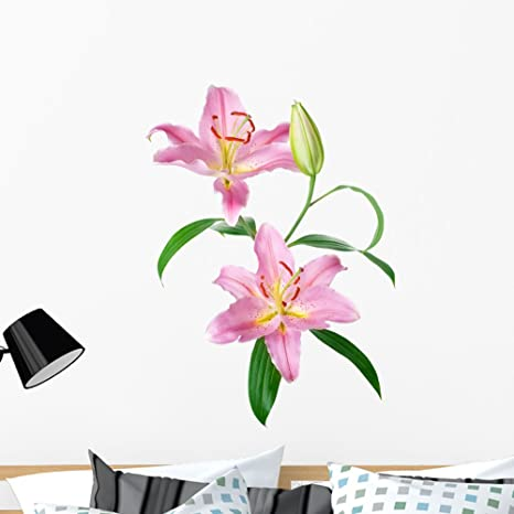 3405a466e3 Amazon.com: Wallmonkeys Pink Lily Flowers Wall Decal Peel Stick Floral  Graphic (36 in H x 24 in W) WM317818: Kitchen & Dining