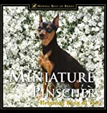 img - for The Miniature Pinscher: Reigning King of Toys (Howell reference books) by Jacklyn Hungerland (2000-05-25) book / textbook / text book