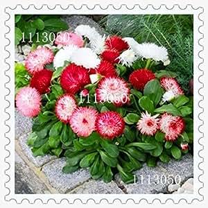 Semillas 100PC crisantemo del arco iris de flores ornamentales, Bonsai, raro color, elegir más nuevas semillas de plantas del jardín de flores de crisantemo