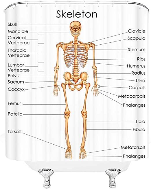 Amazon.com: Xnichohe Skeleton Shower Curtain Human Anatomy Skeletal System  Diagram of Man Body Didactic Science Bone Body System Fabric Bathroom Decor  Set 70x70 Inches Hooks Included Beige White Black: Home & KitchenAmazon.com