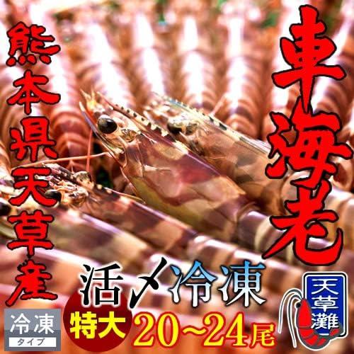 車えび 特大2L【活〆冷凍】車海老 1kg(20~24尾)熊本県天草産 維和島 車エビ 生 急速冷凍 養殖場直送 刺身 新鮮 クルマエビ