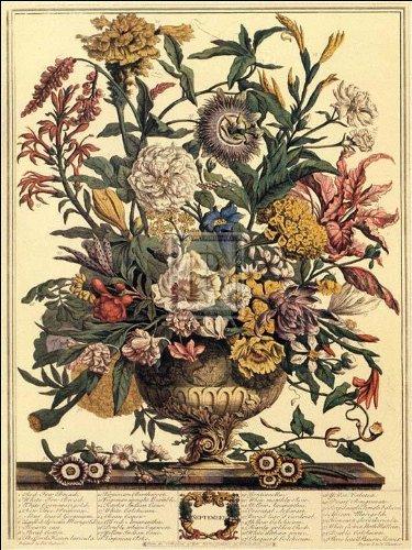 Robert Furber - Twelve Months of Flowers 1730/September 15 x 20 (Of Flowers Twelve Months)