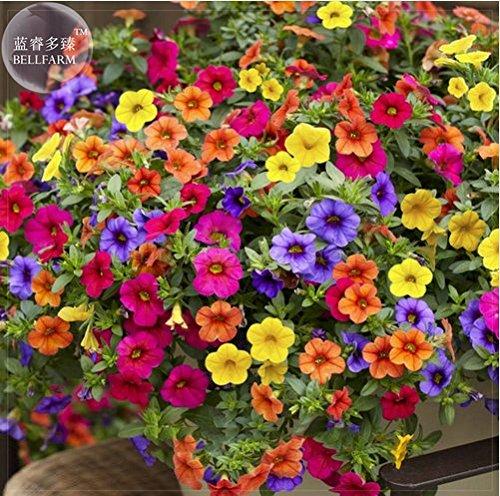 - New 'Xiao Jiujin' Hanging Mixed Bonsai Petunia Hybrid Seeds, 200+ Tom Seeds